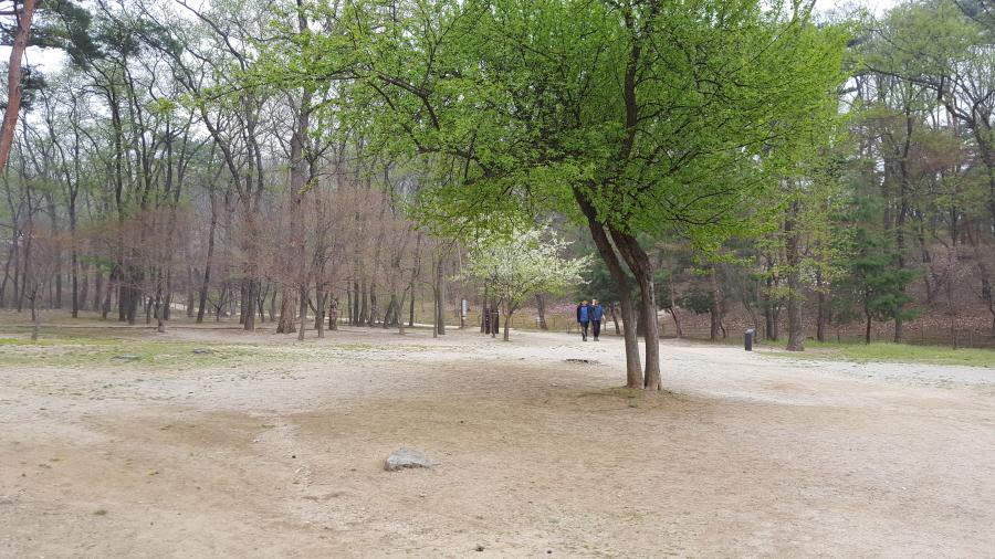 160410_인릉_022.jpg
