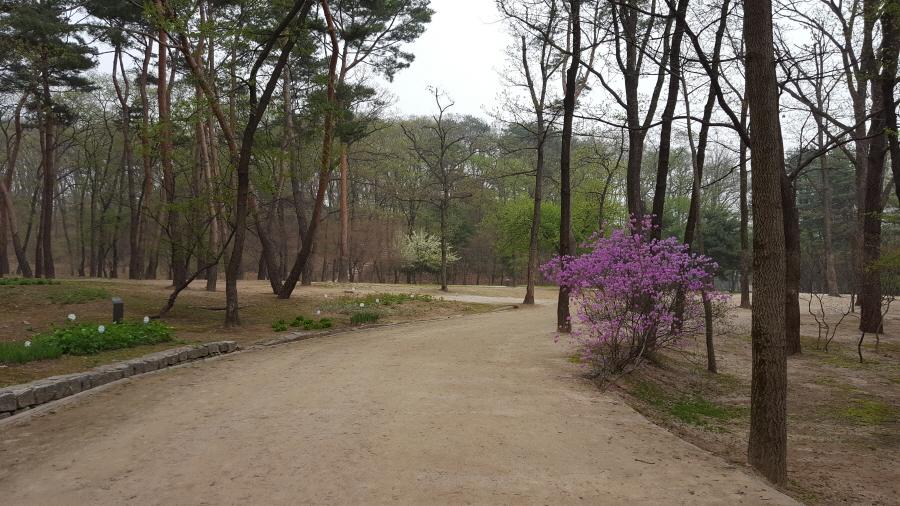 160410_인릉_020.jpg